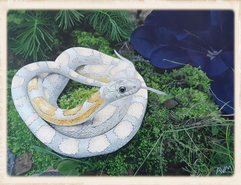 fotorealistisch auf Leinwand gemalte Ghost motley Kornnatter
