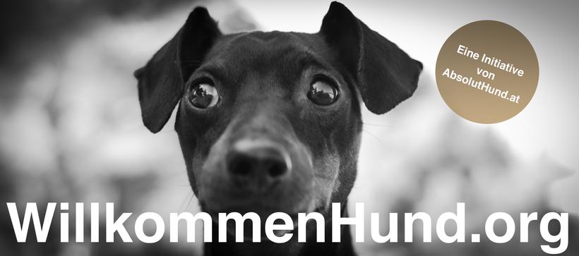 WillkommenHund.org Hund im heißen Auto