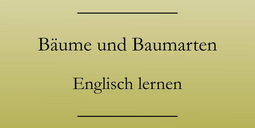 Englisch lernen: Bäume, Baumteile, Baumarten auf Englisch. Ast, Zweig, Rinde