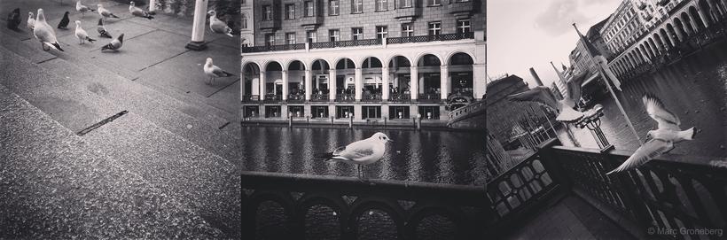 #seagulls in #hamburg city - #MarcGroneberg | Photo © Marc Groneberg