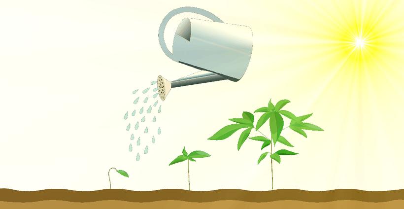 wann cannabis gießen