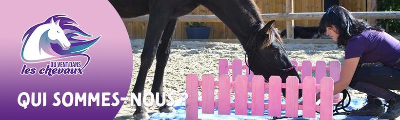 L'équipe et l'histoire du poney-club Du vent dans les chevaux