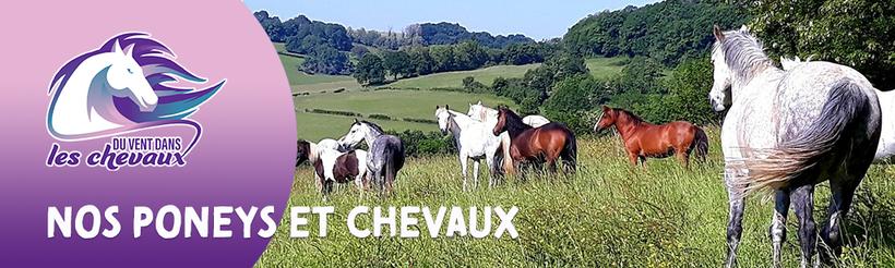 Présentation de nos poneys et chevaux