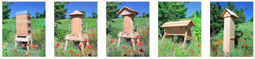 achat de ruche