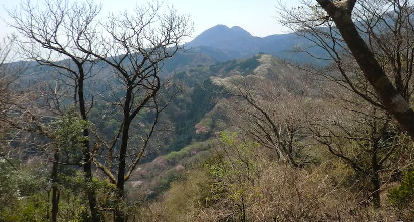 桜の帯・・・間の山〜松川湖分岐・矢筈山