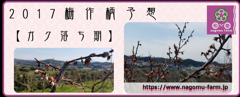 2017梅作柄予想【ガク落ち期:2017.3.25】  和×夢 nagomu farm
