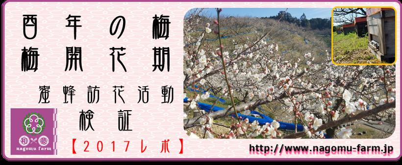酉年の梅【2017】 梅開花期 蜜蜂訪花活動検証 和×夢 nagomu farm