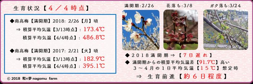 2018 南高梅生育状況【清明:4/4時点】 和×夢 nagomu farm