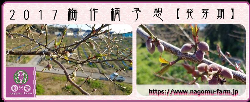 2017 梅作柄予想【発芽期:2017.4.4】  和×夢 nagomu farm