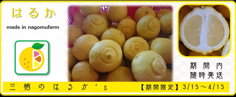 『三栖のはるか's』【七武柑:はるか】商いアイコン 和×夢 nagomu farm