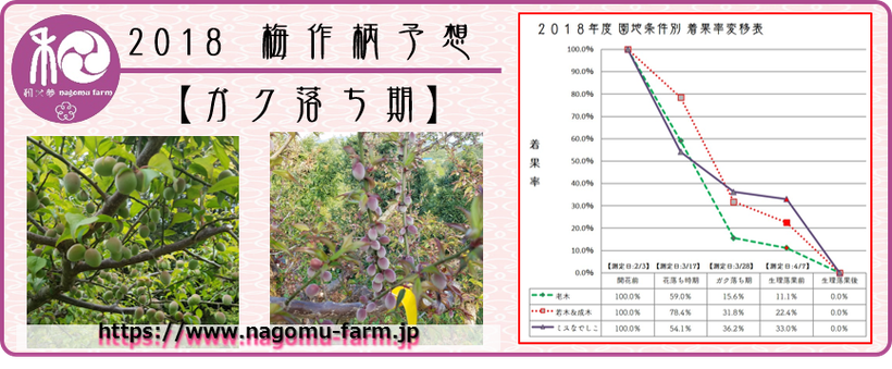 2018 梅作柄予想【ガク落ち期:清明】  和×夢 nagomu farm