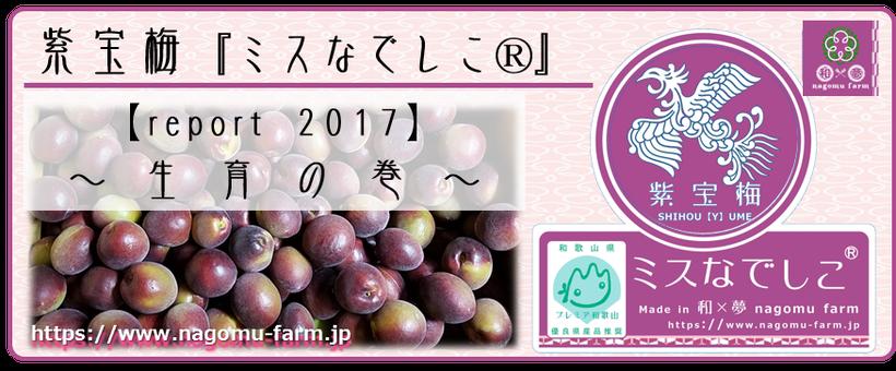 なでしこ report 2017 【生育の巻】 和×夢 nagomu farm  紫宝梅『ミスなでしこⓇ』