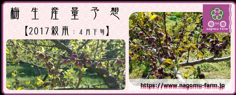 2017 梅最新生産量予想【穀雨:4月下旬】  和×夢 nagomu farm