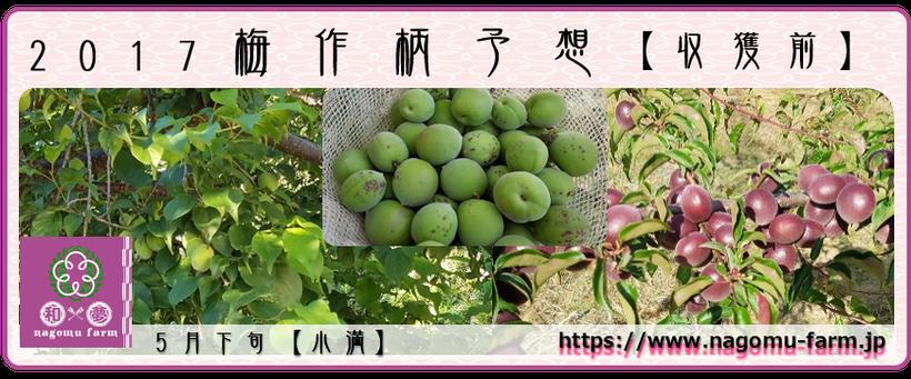 2017 梅作柄予想【収穫前:5月下旬】  和×夢 nagomu farm