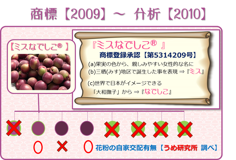 『ミスなでしこⓇ』生誕10周年 play back 10 year 【Y】ume記録 商標【2009】~分析【2010】