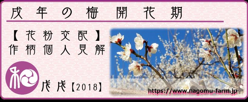 戌年の梅【2018】 梅開花期 花粉交配度【個人見解】 和×夢 nagomu farm