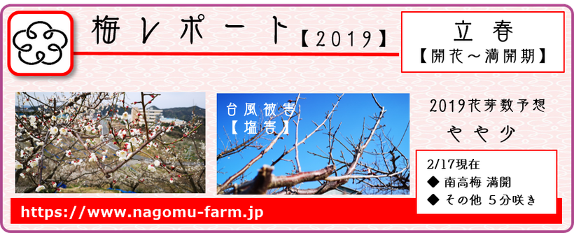 2019梅レポート 【立春:開花~満開期】  和×夢 nagomu farm