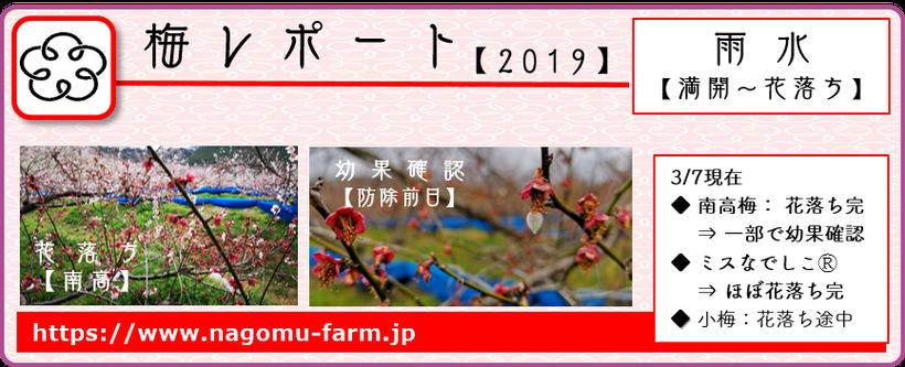 2019梅レポート 【雨水:満開~花落ち期】  和×夢 nagomu farm
