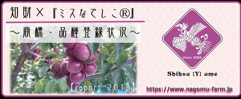 知的財産【商標登録/品種登録】×  紫宝梅『ミスなでしこⓇ』 2018状況 和×夢 nagomu farm