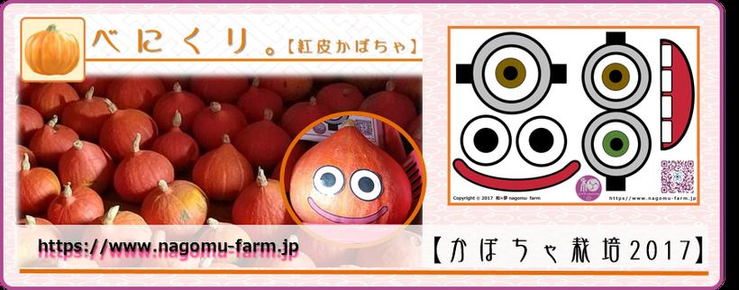 紫芋『べにくり』report 【紅皮かぼちゃ栽培】 和×夢 nagomu farm
