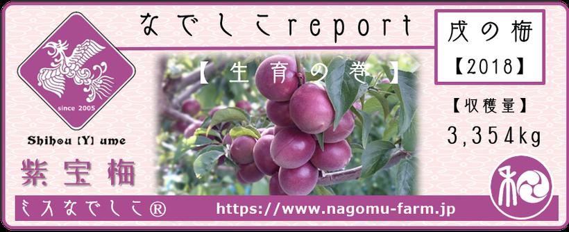 なでしこ report 2018【生育の巻】 和×夢 nagomu farm  紫宝梅『ミスなでしこⓇ』