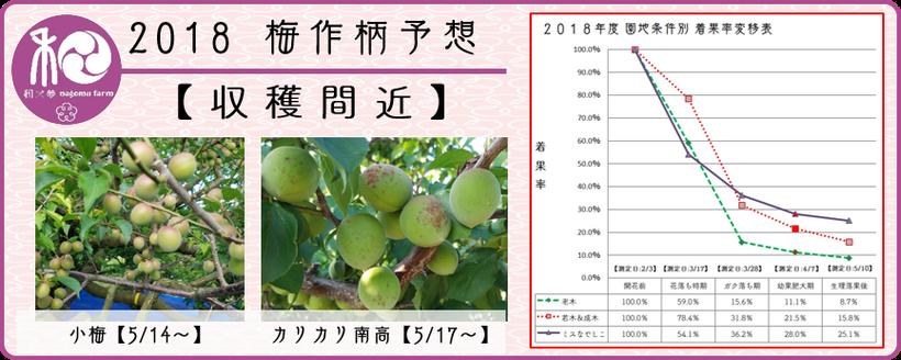 2018 梅作柄予想【収獲間近】  和×夢 nagomu farm