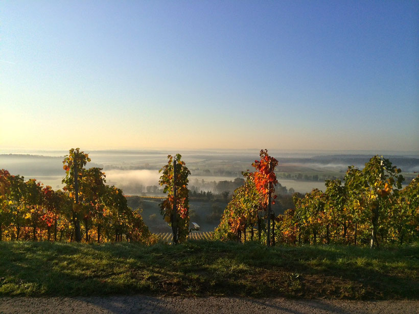 Morgens. Weingut Baumgärtner