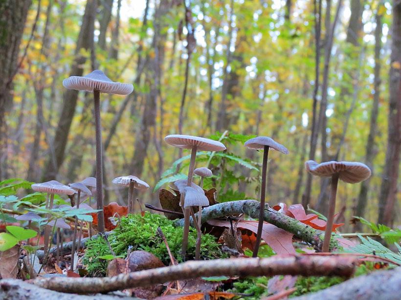 Pilze Herbst MV Mecklenburg Urlaub Herbsturlaub am See