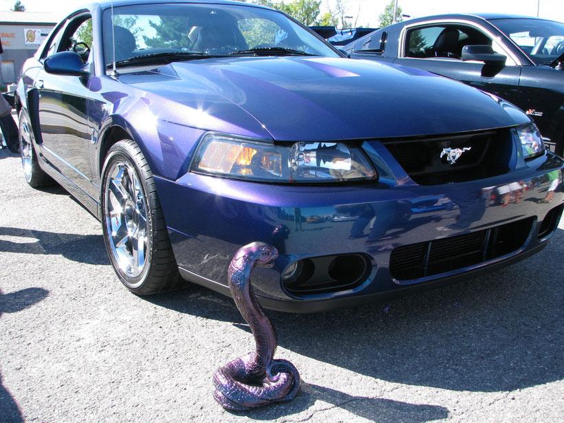 Mustang Cobra 2004  ¤