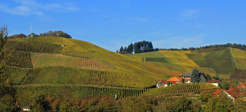 Panorama einer Weinplantage