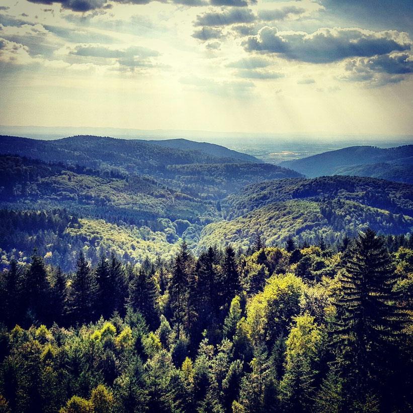 Wald, Odenwald, Survivalgegend