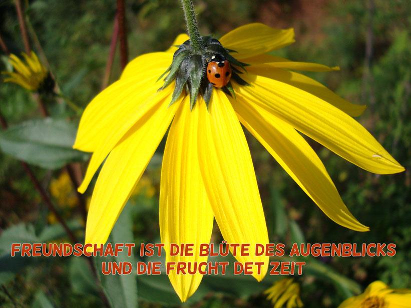 Freundschaft ist die Blüte des Augenblicks und die Frucht der Zeit