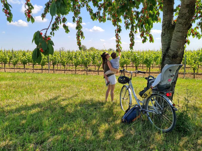 Radtour vom Bauernhof durch die umliegenden Weingärten