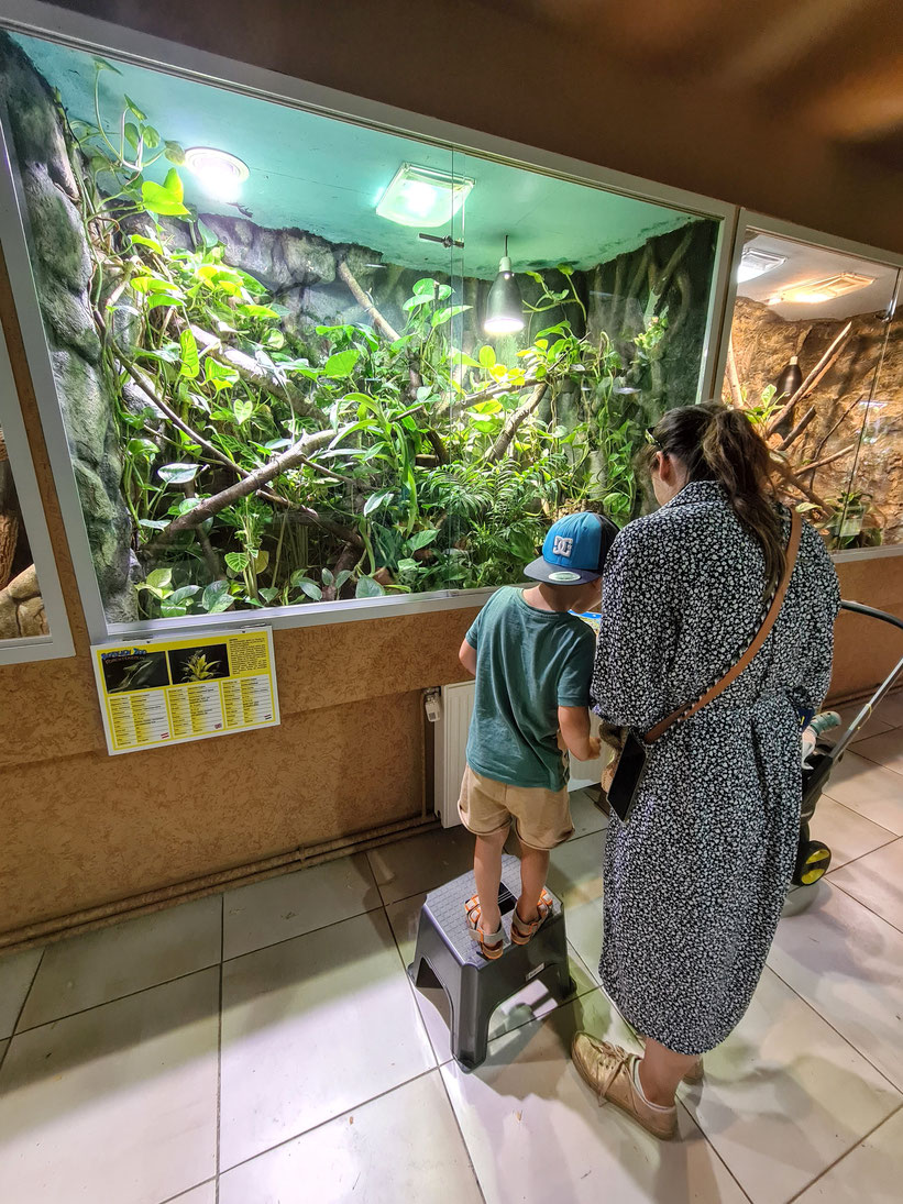 Rätsel Reptilien Zoo Forchtenstein
