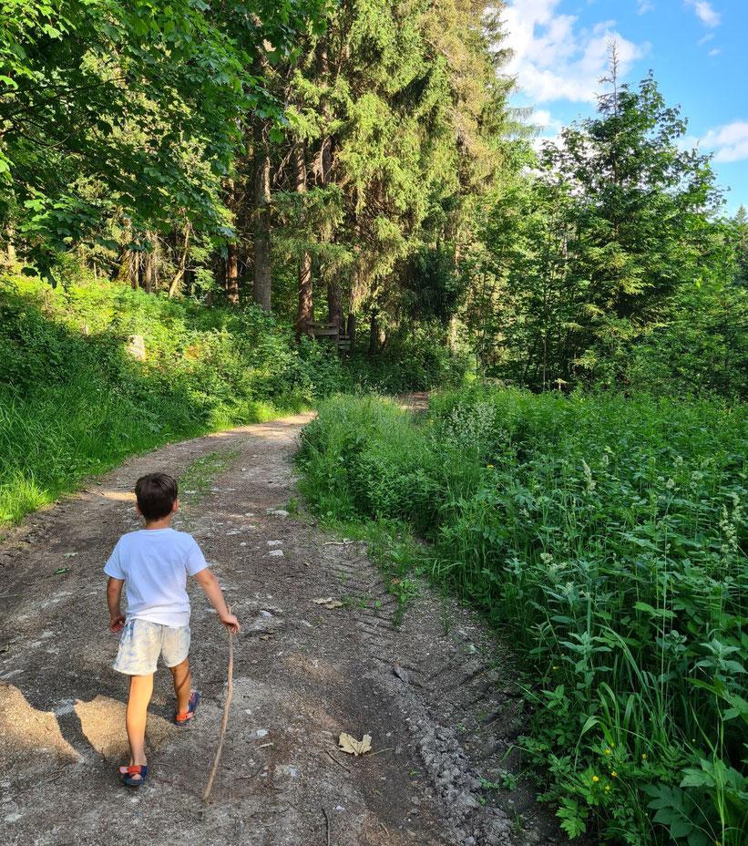 Waldwanderweg Simalhof Schau aufs Land