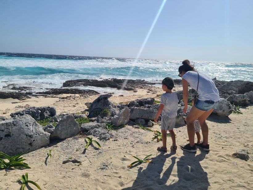Cozumel Punta Sur Eco Beach Park