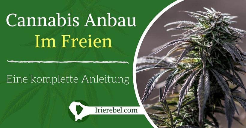 Cannabis Anbau im Freien Outdoor Anbau Anleitung