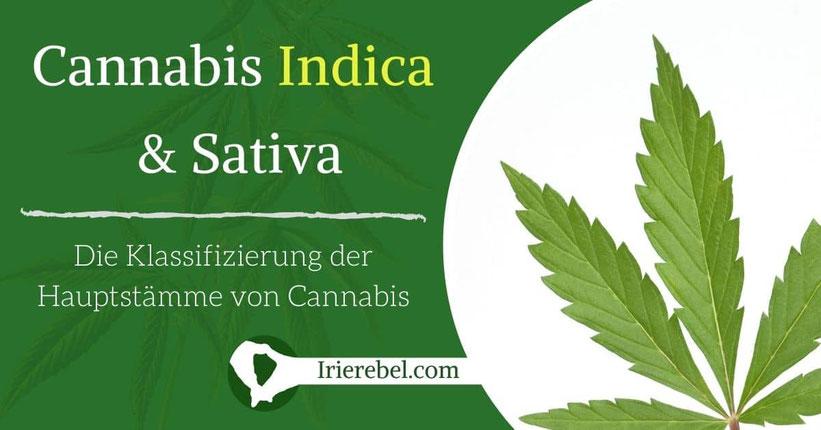 Cannabis Indica & Cannabis Sativa - Die Klassifizierung der Hauptstämme von Cannabis