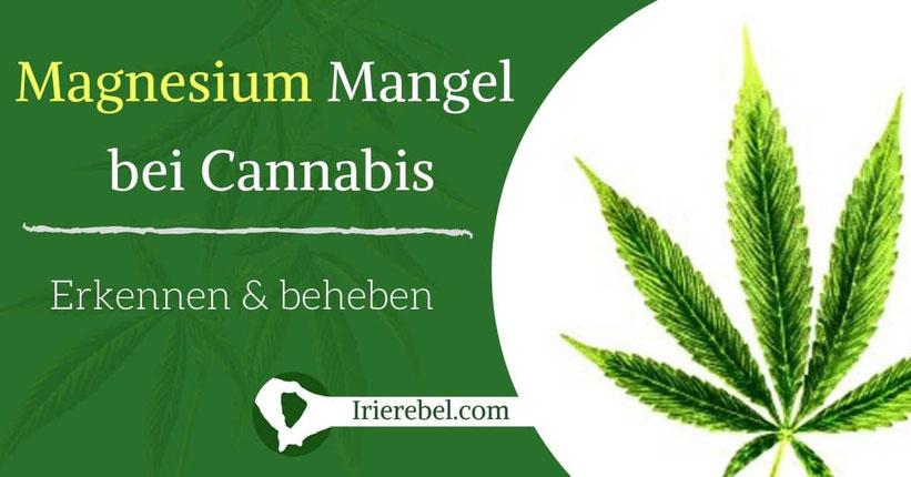 Magnesium (Mg) Mangel bei Cannabis erkennen & beheben