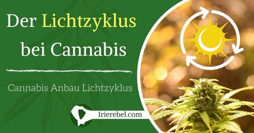 Der Lichtzyklus für Cannabis - Cannabis Anbau Lichtzyklus