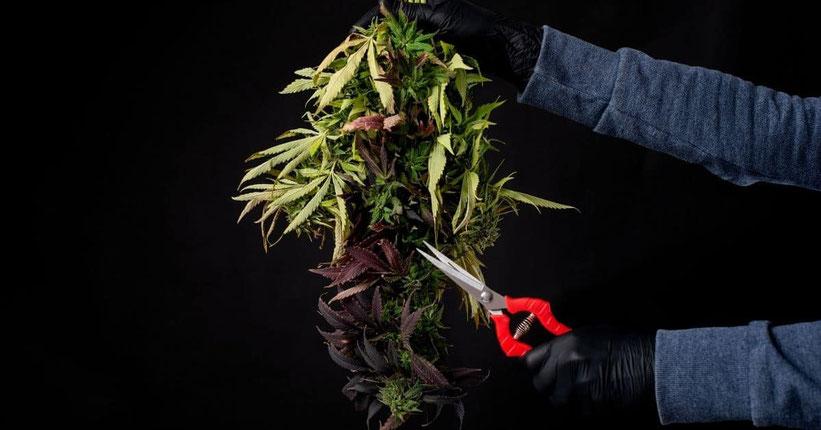 ernten wenn die pflanzen reif sind