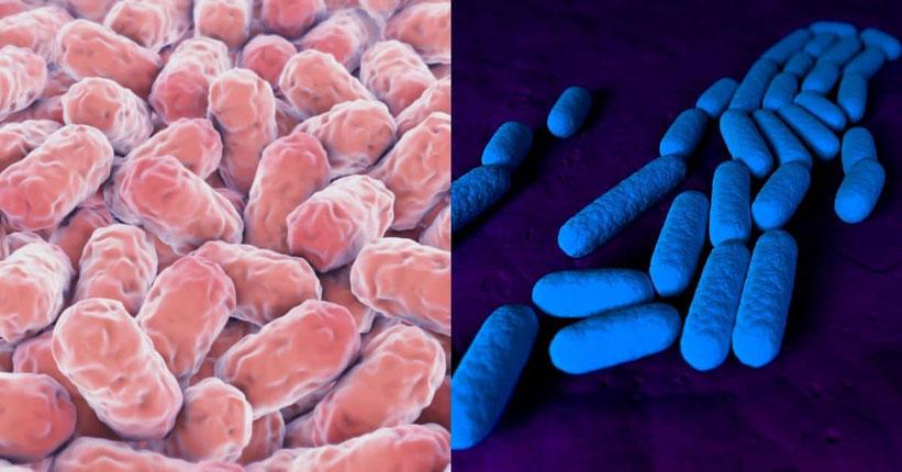 Ampelomyces Quisqualis, Bacillus Pumilus & Bacillus subtilis