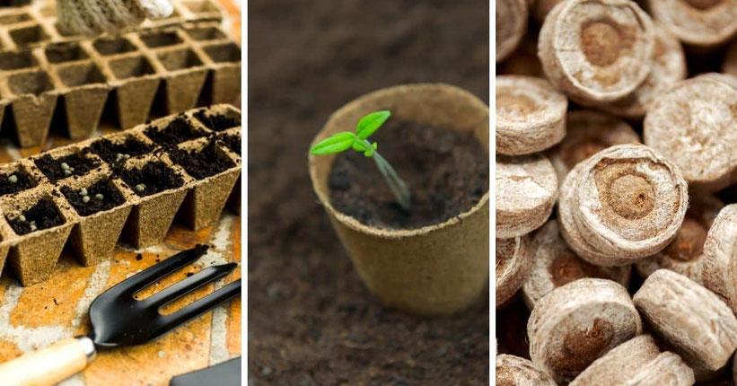 Jiffys, Torfquellballen für die Anzucht von Cannabis Samen Outdoor Anbau
