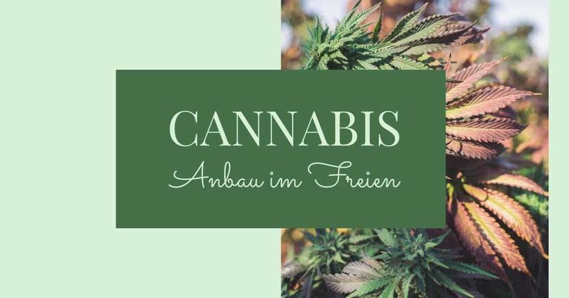 Wie man Cannabis im Freien (Outdoor) anbaut - Schritt für schritt