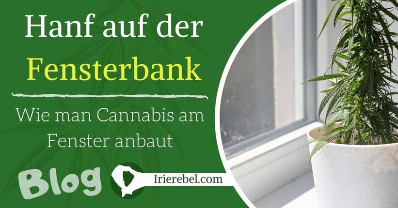 Hanf auf der Fensterbank – Wie man Cannabis am Fenster anbaut