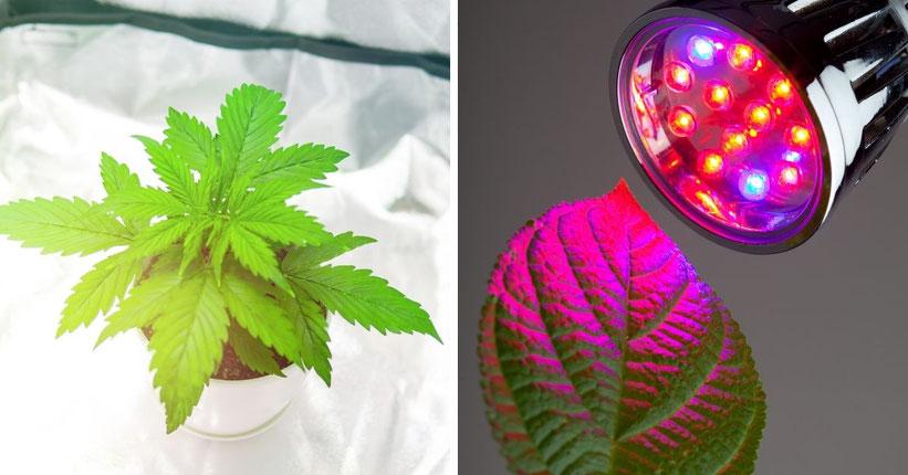 Die Bedeutung von Grow-Lampen für den Cannabis-Anbau