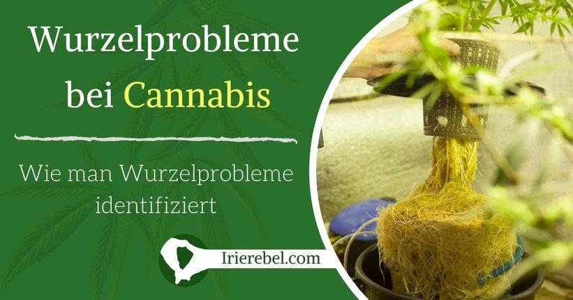 Wie man Wurzelprobleme bei Cannabis-Pflanzen identifiziert
