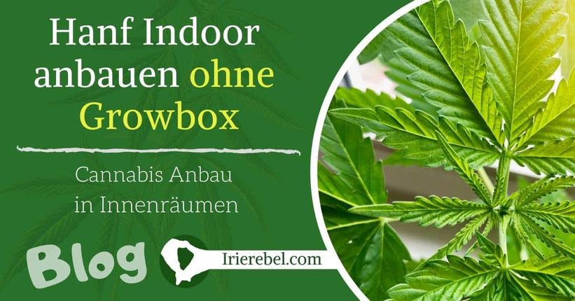Hanf Indoor anbauen ohne Growbox
