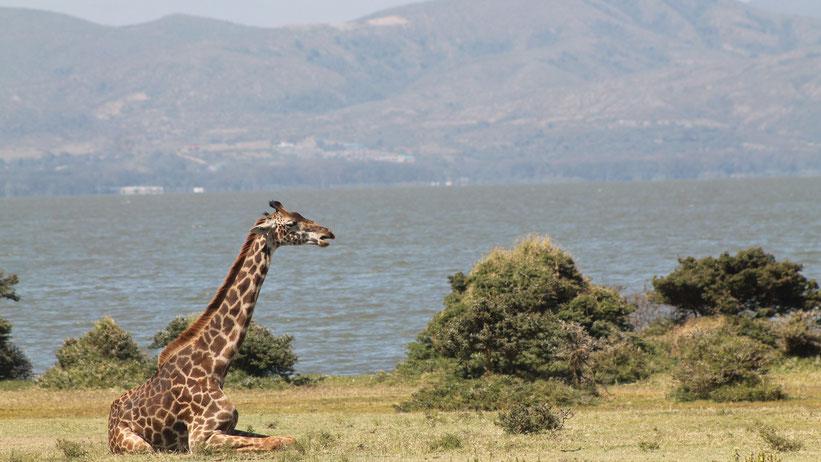 Walking Safari auf Crescent Island, Kenia