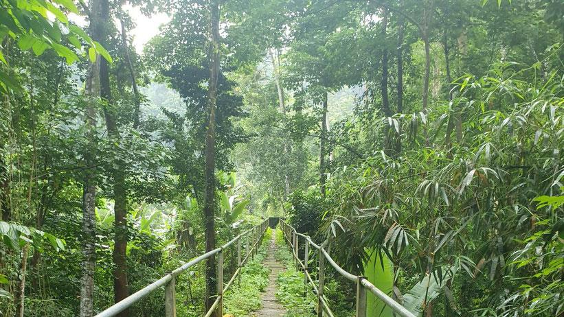 Obo Nationalpark, Neves, São Tomé und Príncipe